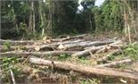 Kiểm tra, xử lý nghiêm hành vi phá hoại rừng tự nhiên
