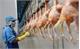 Lô gà đầu tiên của Việt Nam sẽ xuất sang Nhật vào ngày 9-9