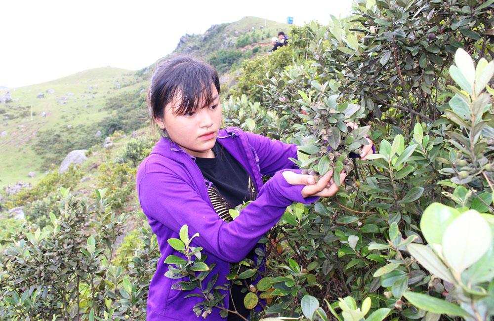 Hàng nghìn lượt người đến Khu du lịch Đồng Cao; Sơn Động; du khách; Vân Sơn
