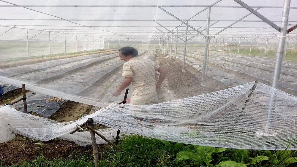 Tân Yên xây dựng mô hình nhà lưới sản xuất rau, quả an toàn
