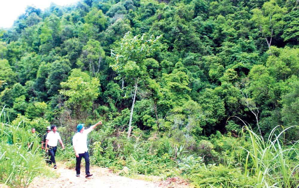 Chung tay giữ rừng Tuấn Đạo