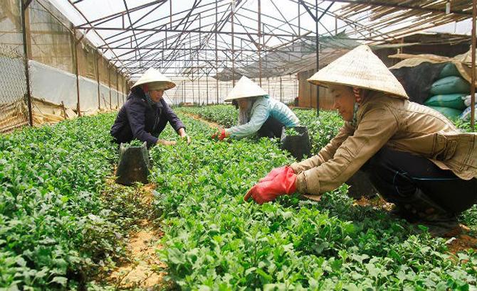 Chỉ có 1% doanh nghiệp rót vốn vào nông nghiệp