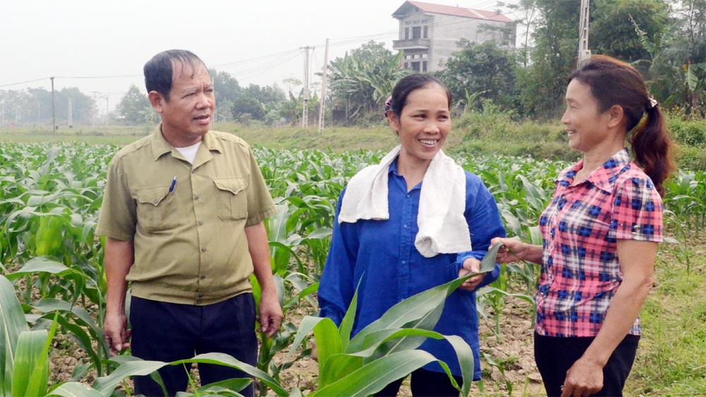 Phát triển đảng viên khu vực nông thôn: Chưa đáp ứng yêu cầu đề ra
