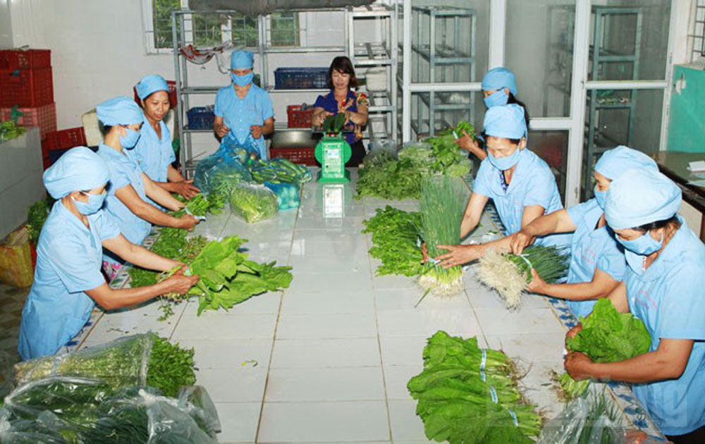 Safe vegetable grown under VietGAP standard promoted