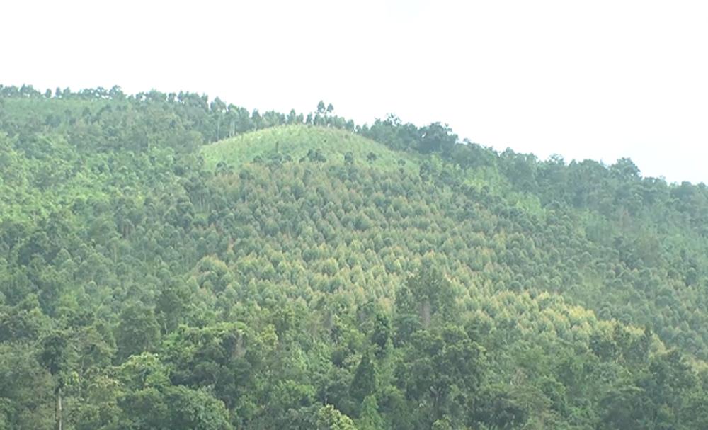 Lục Nam hoàn thành ký cam kết bảo vệ rừng tự nhiên