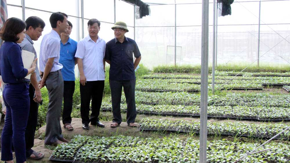 Quan tâm thành lập các HTX nông nghiệp công nghệ cao