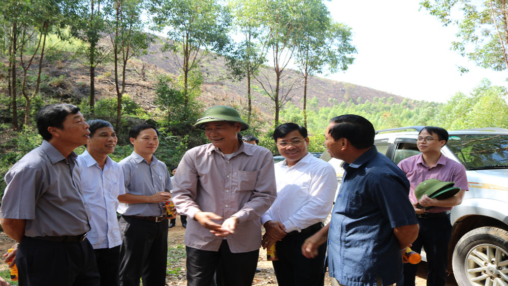 Secretary Bui Van Hai calls for protection, effective exploitation of forest resources