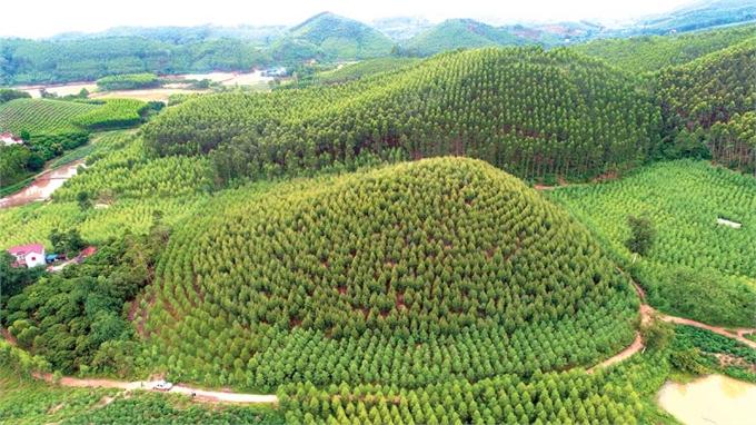 Nông dân Yên Thế làm giàu từ rừng