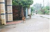 Chó không rọ mõm và thả rông vẫn tự do ra đường