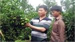 Bắc Giang có 6 đại biểu dự hội nghị nông dân sản xuất kinh doanh giỏi toàn quốc