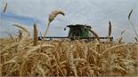 Bộ Nông nghiệp Nga sẽ cung cấp 600 nghìn tấn lúa mỳ cho Venezuela