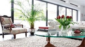 Chọn mua cây cảnh trong nhà phù hợp