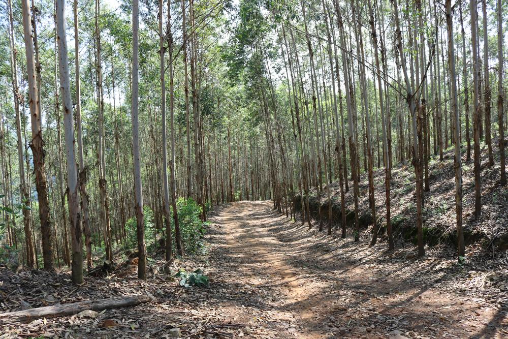 Thành lập 67 tổ xung kích chữa cháy rừng ở các xã trọng điểm