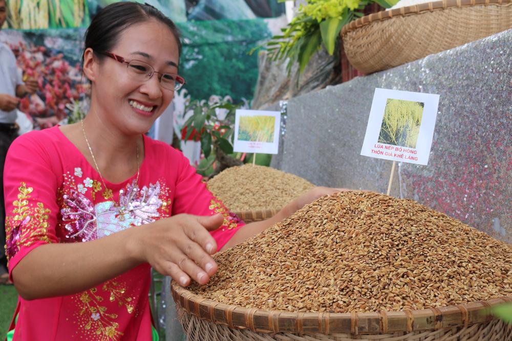 Thóc nếp bồ hóng chỉ có ở những thôn nằm dọc sông Lục Nam thuộc xã Tiên Hưng có hương vị đặc biệt thơm ngon, dẻo, béo...