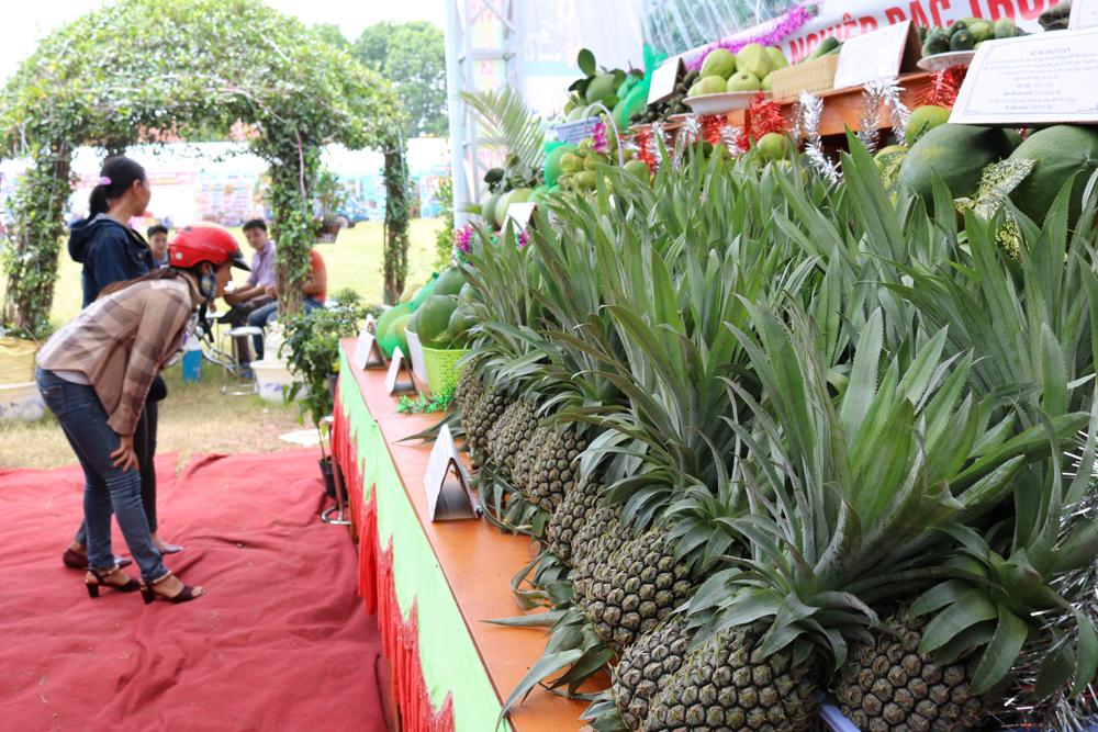 Dứa Bảo Đài nổi tiếng do được trồng trái vụ cũng được đưa đến trưng bày tại Ngày hội...