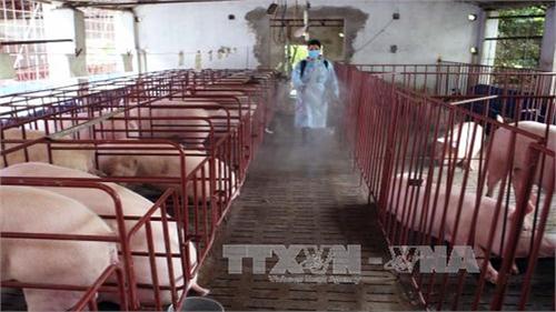 Khống chế được dịch bệnh trên đàn gia súc, gia cầm