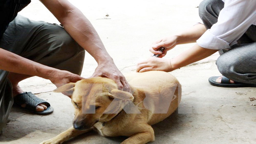 Health officials seek measures to eliminate rabies