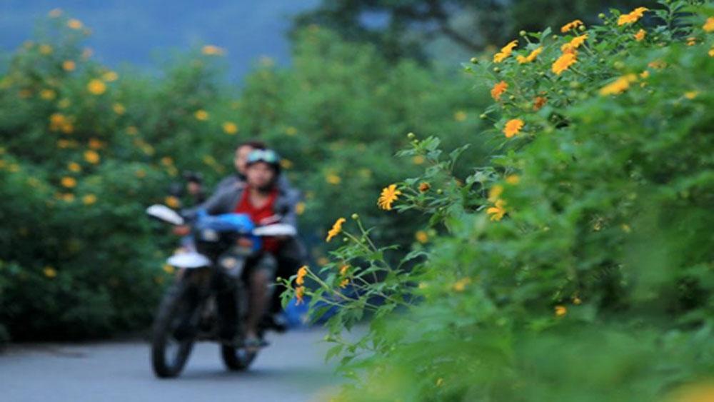 Du lịch Ba Vì mùa hoa dã quỳ