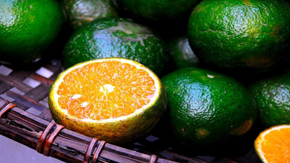 Chọn cam tươi ngon nhất, quả ngọt, nhiều nước