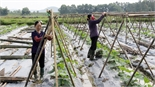 Hỗ trợ hợp tác xã khai thác vùng sản xuất trọng điểm