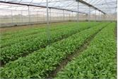 Triển khai xây dựng 6 mô hình sản xuất nông nghiệp ứng dụng công nghệ cao