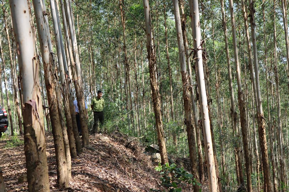 Quy định rõ trách nhiệm của chi bộ đảng, lãnh đạo thôn trong quản lý, bảo vệ rừng