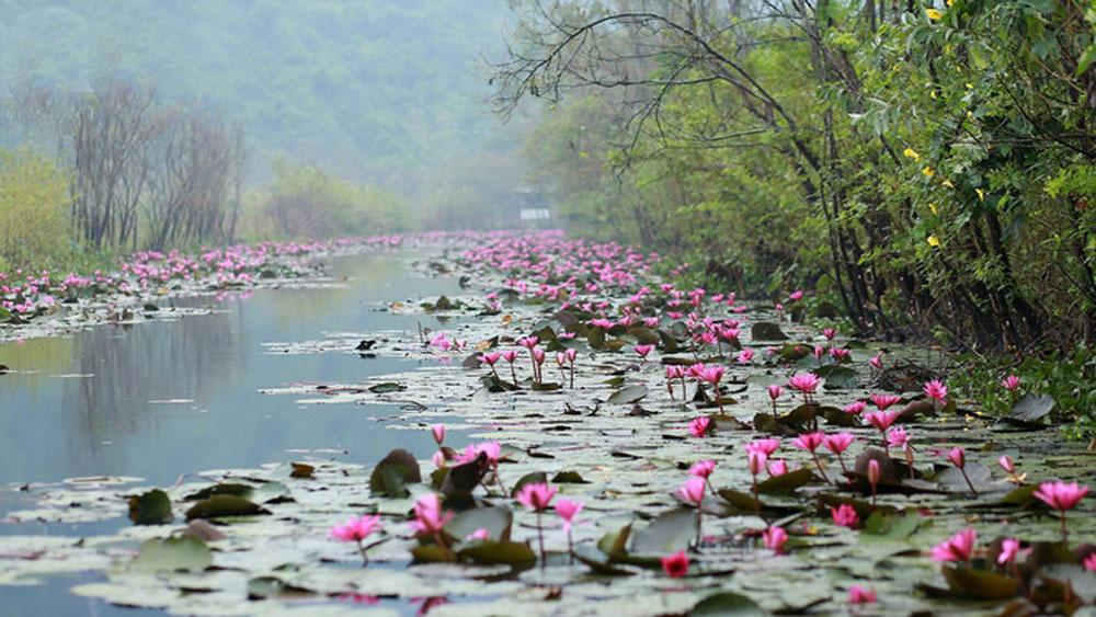 Suối Yến đẹp đến ngẩn ngơ mùa nước nở hoa tím