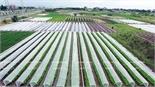 Xây dựng 8 mô hình nông nghiệp ứng dụng công nghệ cao
