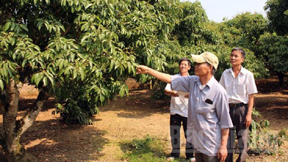 Lục Ngạn: Gần 13 nghìn lượt nông dân được tập huấn chuyển giao khoa học kỹ thuật