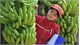 Vietnamese farm produce seeks path to Middle East