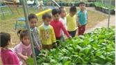 Trường Mầm non Hoa Phượng: Điển hình thi đua dạy tốt