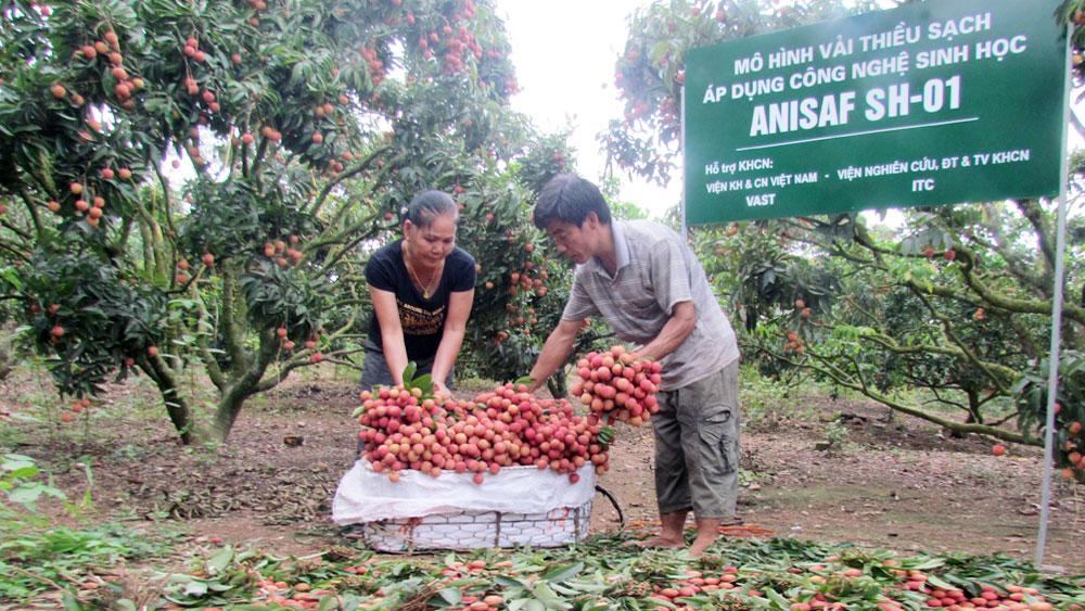 19 sản phẩm nông nghiệp tiêu biểu
