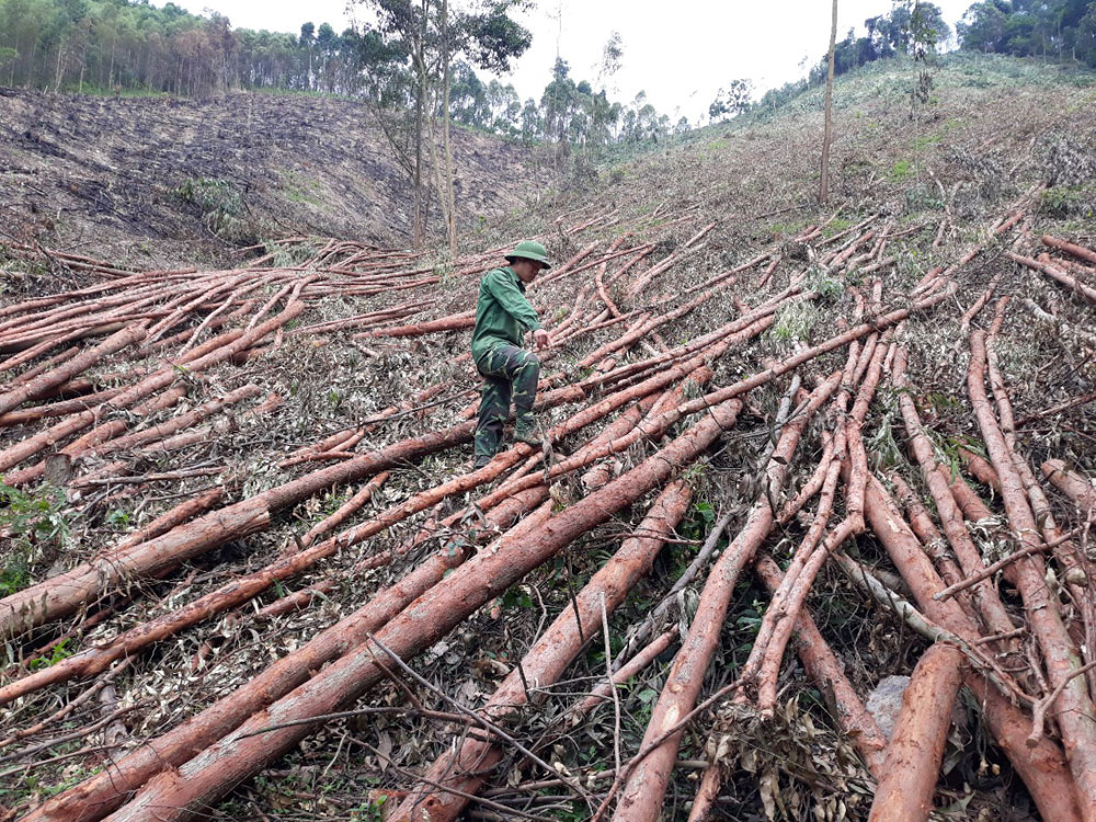 Sớm giải quyết các vụ kiện tranh chấp đất rừng