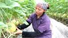 Hiệp Hòa: Gắn nhãn mác cho nông sản