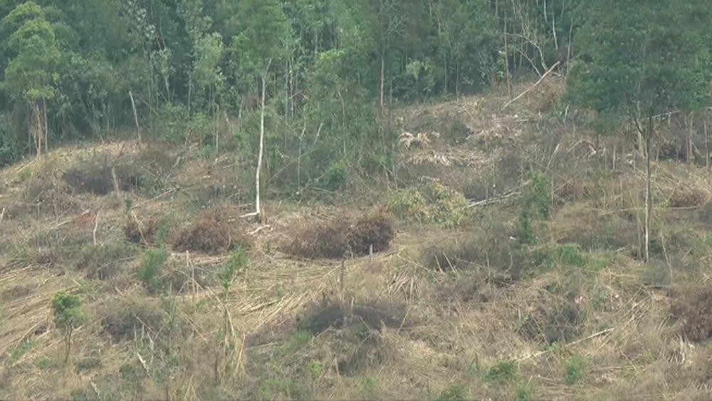 Xử lý kịp thời 2 vụ phá rừng tự nhiên tại xã Lục Sơn
