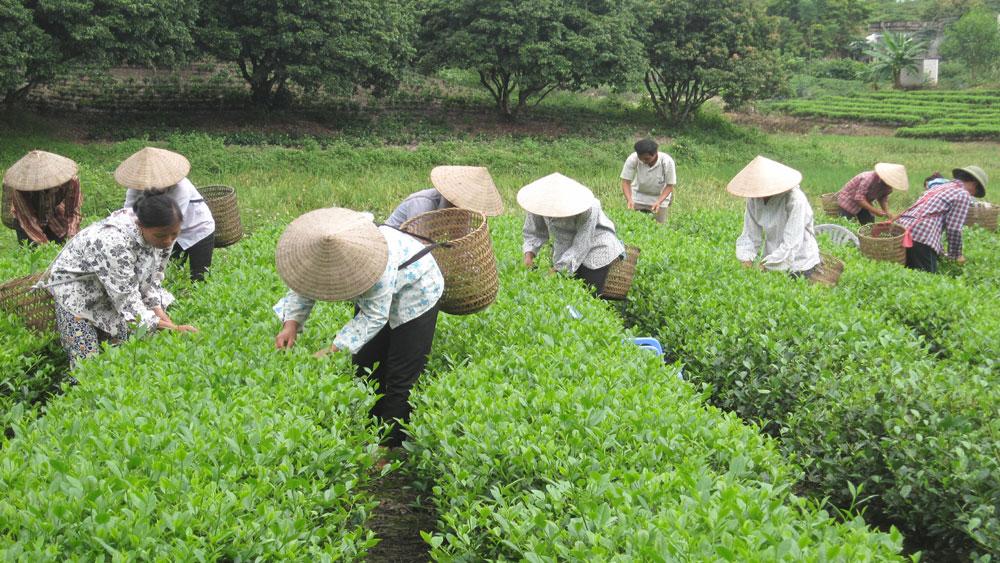 Yên Thế, phấn đấu, thành lập mới 3 hợp tác xã, tổ hợp tác nông nghiệp