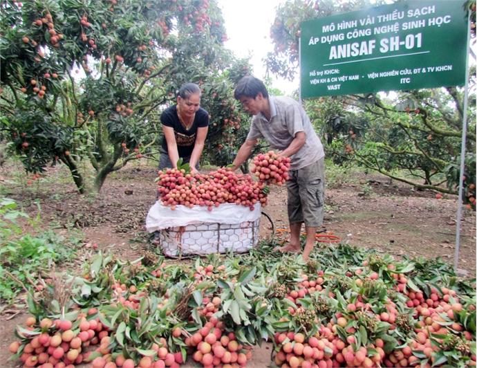 Bac Giang honors 19 typical agricultural products