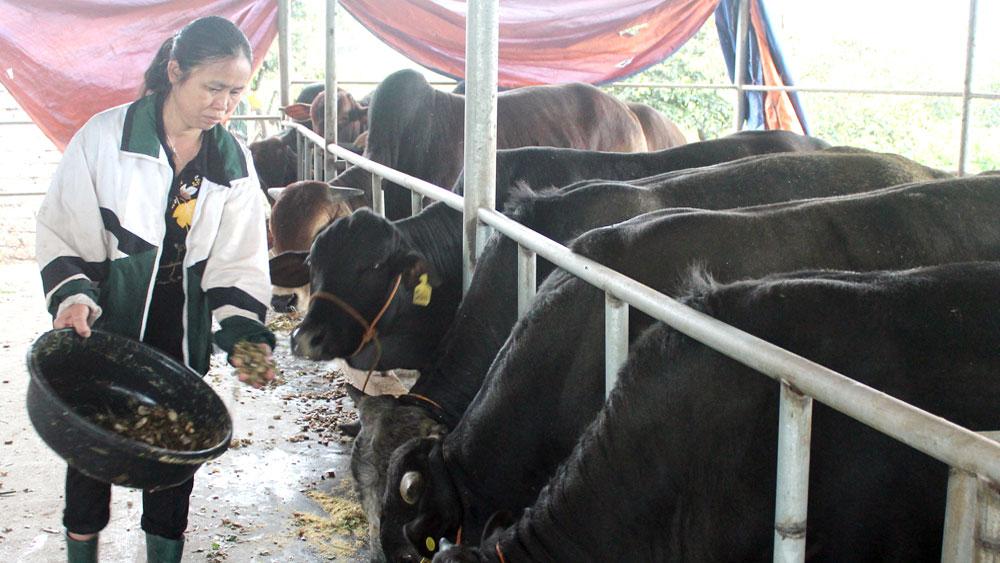 Ban hành tiêu chí, điều kiện trong chăn nuôi: Giải bài toán xử lý chất thải gia súc, gia cầm
