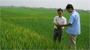 """Lạm dụng phân hóa học, làm đất """"xổi"""": Chai cứng đất, sâu bệnh gia tăng"""