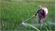 Loại chất độc hại khỏi danh mục thuốc bảo vệ thực vật