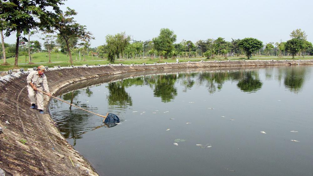 Xuất hiện cá chết tại hồ Công viên Hoàng Hoa Thám