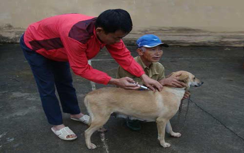 Tiêm 24,8 nghìn liều vắc - xin phòng dại cho đàn chó