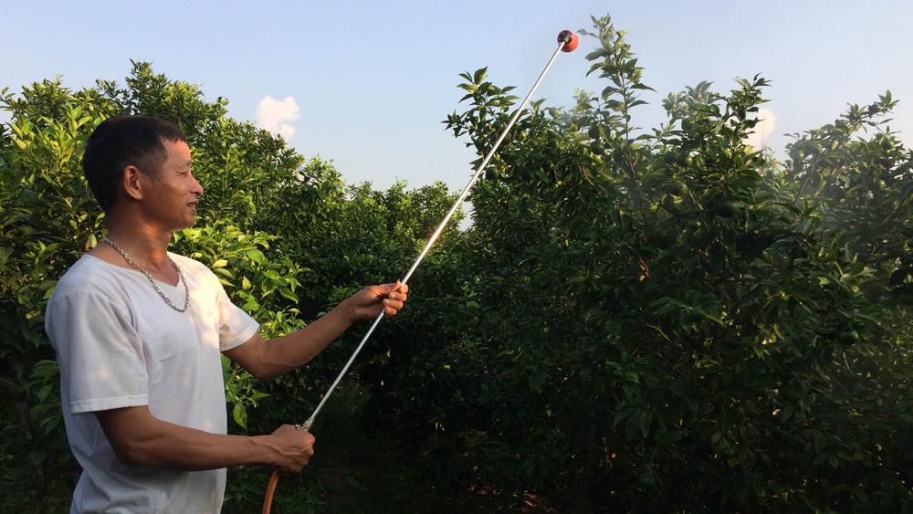 Hiệu quả sử dụng thuốc trừ sâu thảo dược ở Lục Ngạn
