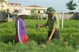 Chuẩn bị mùa trồng rừng 2018: Chú trọng chất lượng cây giống
