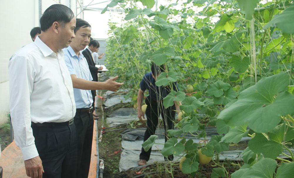 Phó Chủ tịch UBND tỉnh Sơn La Nguyễn Quốc Khánh thăm mô hình sản xuất dưa lưới tại thôn Đồng Tâm 3, xã Thường Thắng (Hiệp Hòa)