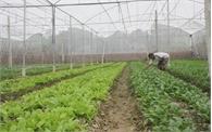 Hơn 1 tỷ đồng đầu tư nhà lưới trồng rau