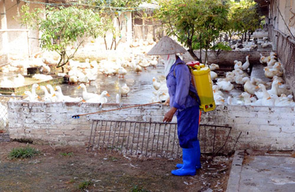 Lạng Giang tổng vệ sinh tiêu độc, khử trùng môi trường