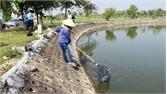 Cá chết tại hồ Công viên Hoàng Hoa Thám (TP Bắc Giang): Tiếp tục lấy mẫu phân tích, làm rõ nguyên nhân