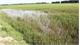 Công ty cổ phần Gạch Thạch Bàn: Bồi thường cho người dân có diện tích lúa thất thu