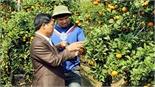 Nhà vườn Lục Ngạn: Chọn quả ngọt cho ngày hội lớn